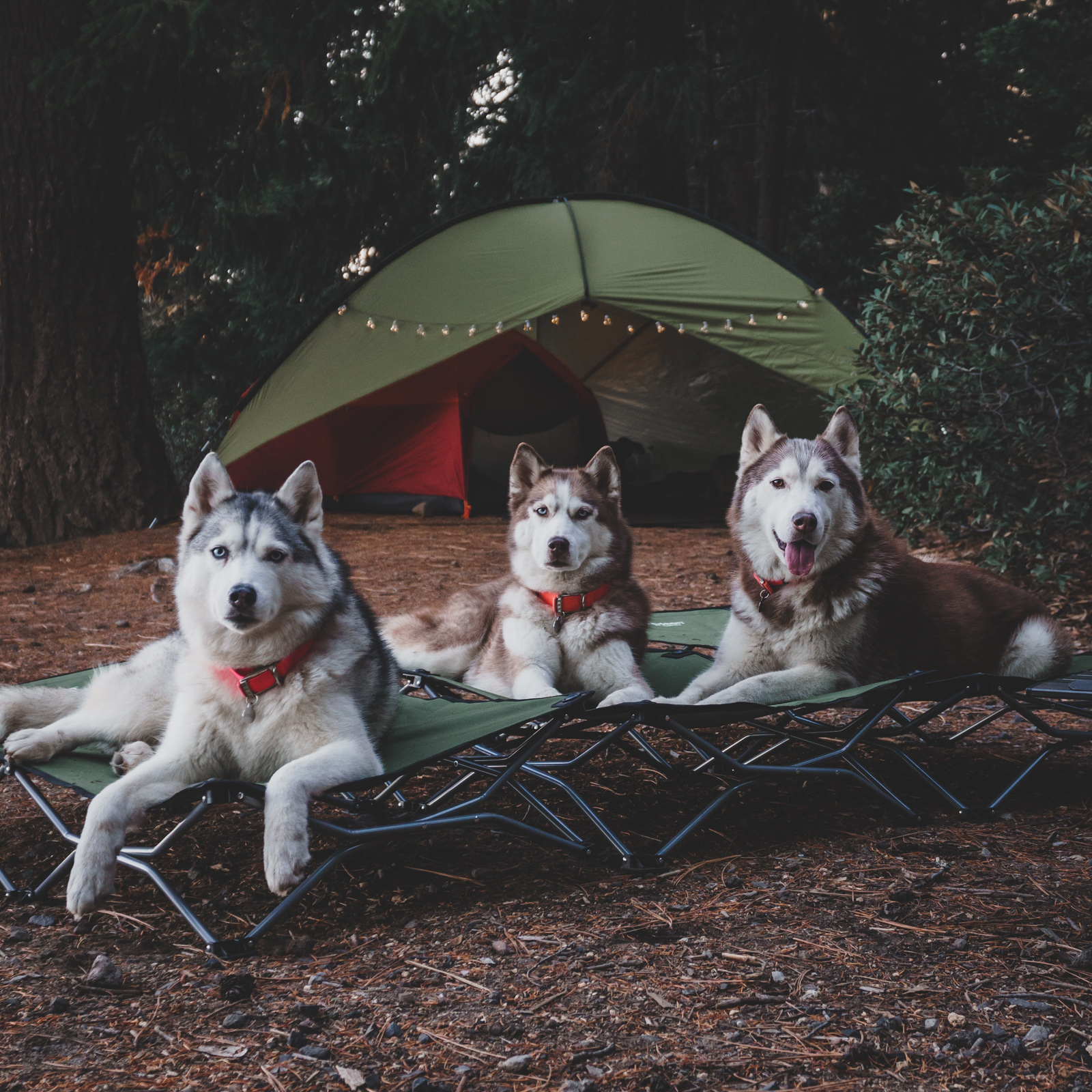 husky squad camping